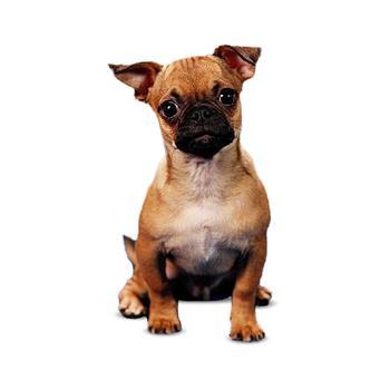 chug-dog