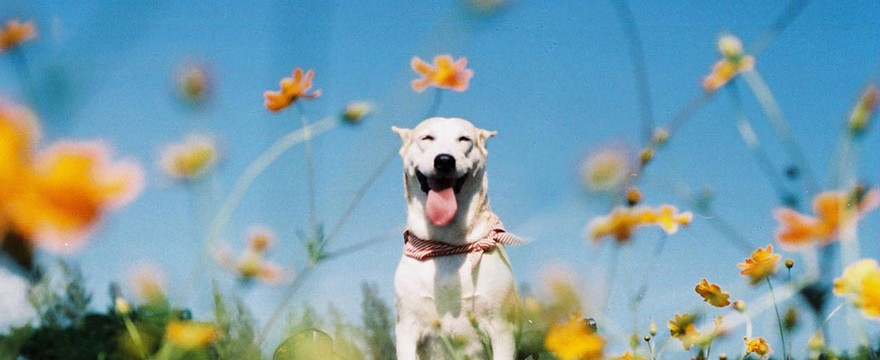 happy-dog-photography-gluta-thailand-22